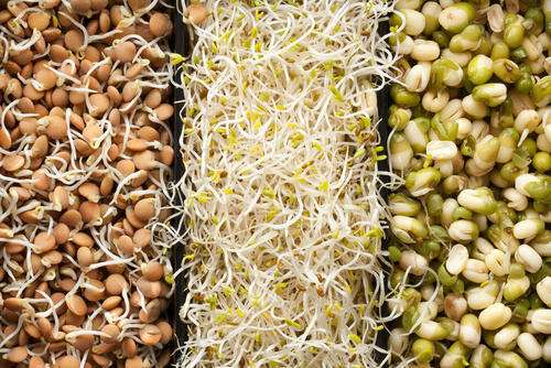 Healthy Indian Snacks Sprouts