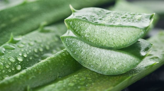 Aloe Vera for Irregular Periods Treatment For Unmarried