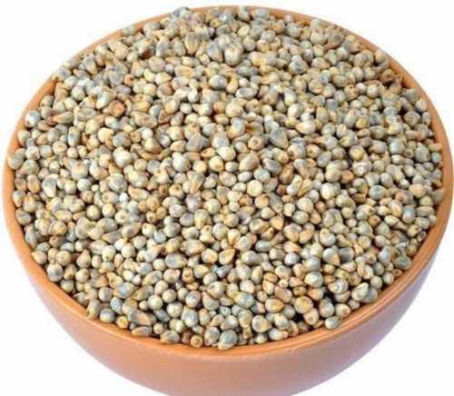 bajra millet Types of Millets